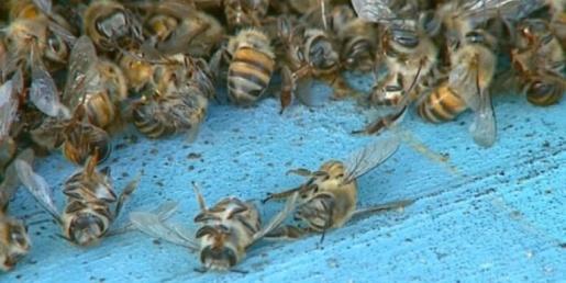 Servidor público é atacado  por enxame de abelhas no interior