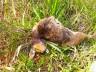 SMO: animais são encontrados amordaçados e degolados no interior