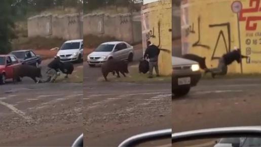 VÍDEO: porco morde motoboy violentamente durante entrega