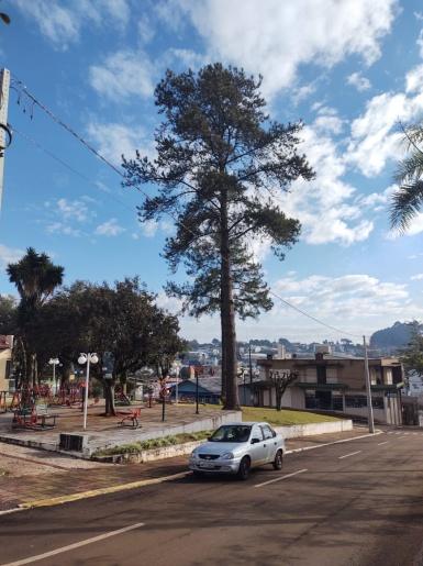 Setor de Meio Ambiente inicia desenvolvimento do projeto de arborização